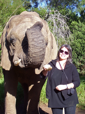 Elephant plett article