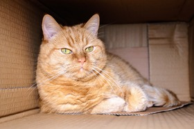 Cat in a box article