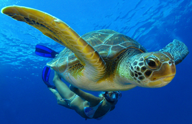 Sea turtle matador seo article