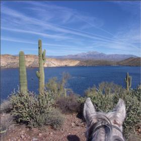 Saguaro lake article