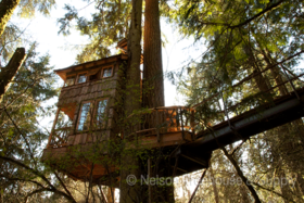 Treehouse point sh 1 article