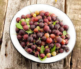 Gooseberries article