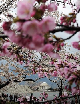 Gty blossoms dm 120315 vblog article