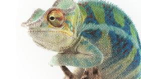 Blog chameleon article