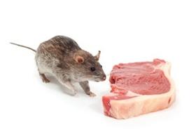 Rat1 article
