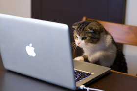 Cat using computer article