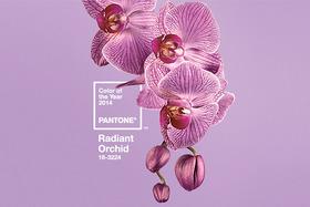 Orchid lede article