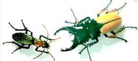 Beetles article