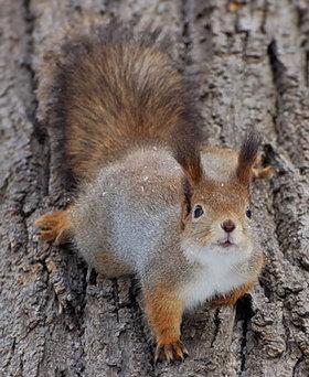 Squirrel4 article