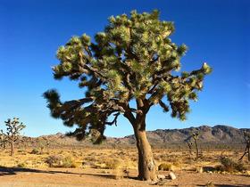 Tree article