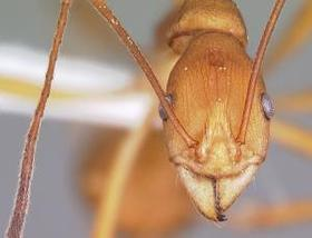 Zoologger ant article