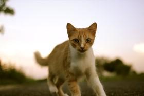Cat travel 940x629 article