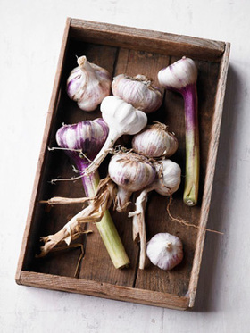 Garlic bulbs article