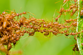 Ants article