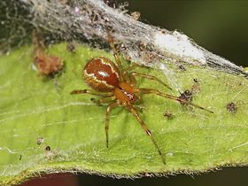 Social spider division labor 01 80753 990x742 article