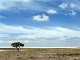 Etosha tree article