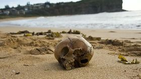 Skull from 1001 ce washed up on australian beach article