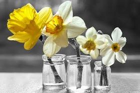 Springflowersteresathompson article