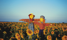 Scarecrows article