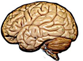 Brain hirez article