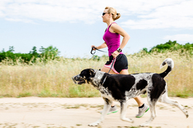 Running dog article