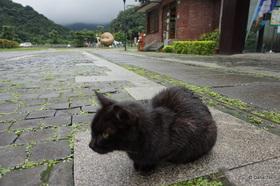 Cat village cat1 taipei untapped cities dana ter article