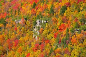 Fall foliage article