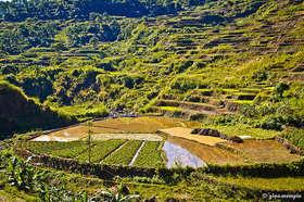 Rice terraces article
