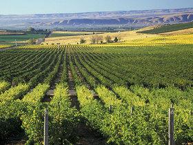 53e2f8c5c2d3f39d3610cf43 yakima valley vineyards article