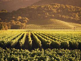 53e2e839dddaa35c30f63f6d california wine country article