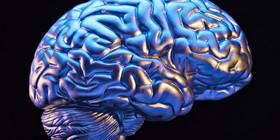 O brain facebook article
