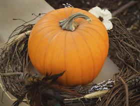 Elegant halloween decor article