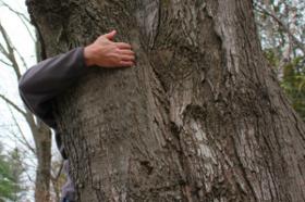 11 24 tree hugger1 300x199 article