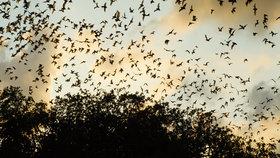 Bat cave videosixteenbynine1050 article