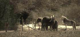 Rus 1 horse article
