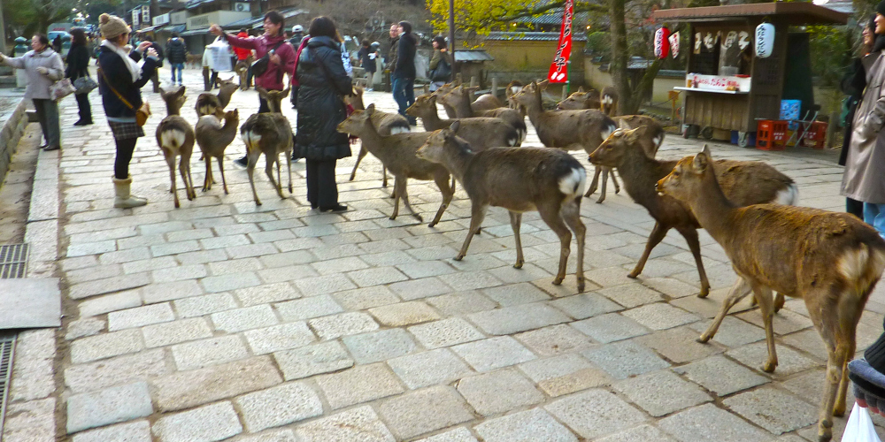 Deer3rs.jpg