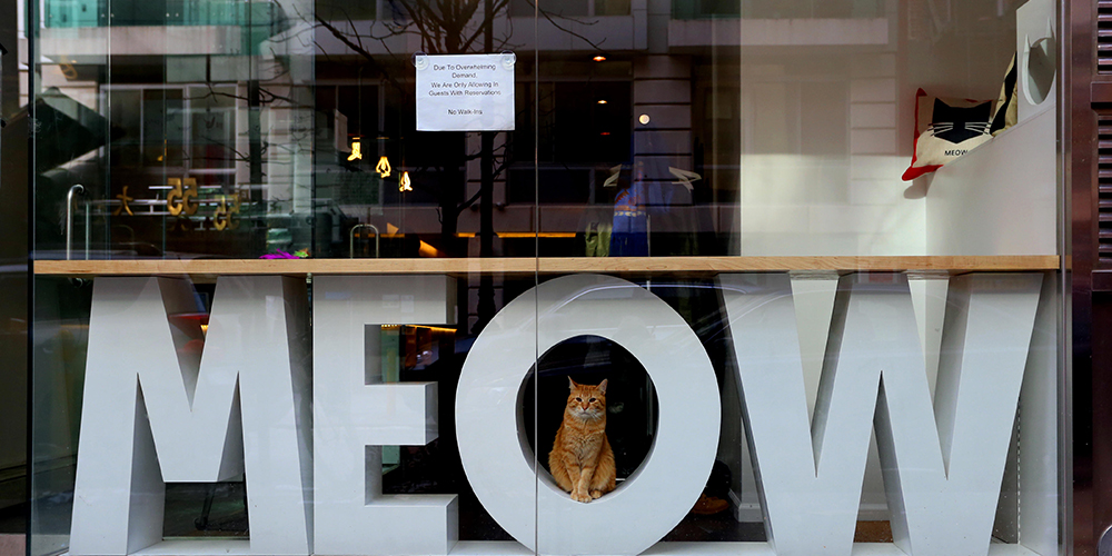 Cozy up to the cats at Meow Parlour. (Photo: Robert K. Chin - Storefronts / Alamy Stock Photo)