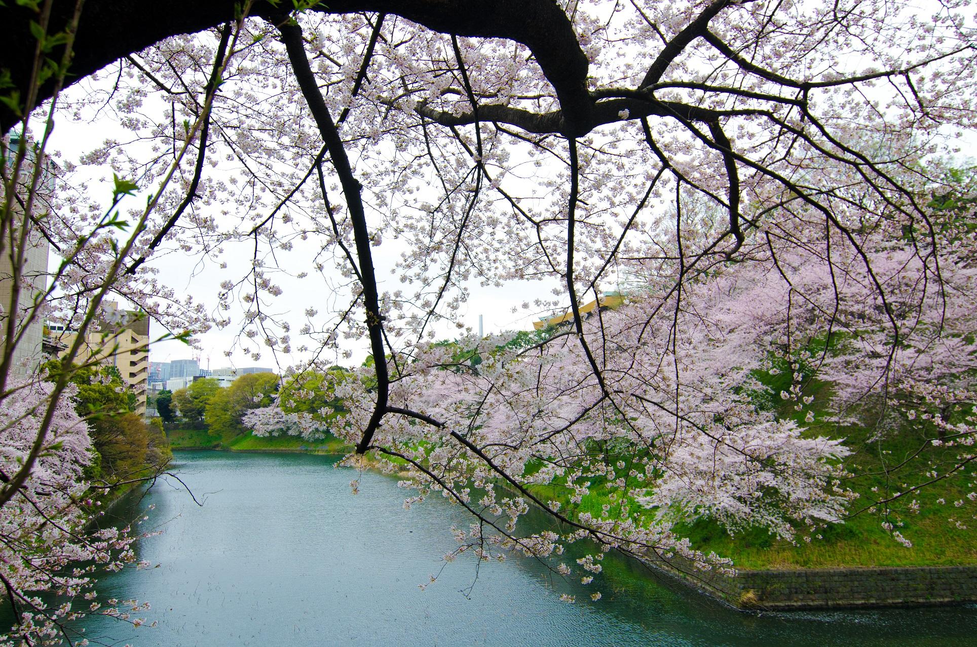 Hanami (by Paul Robinson, CC BY 2.0 - https://www.flickr.com/photos/paulrobinson/5672252247/ )