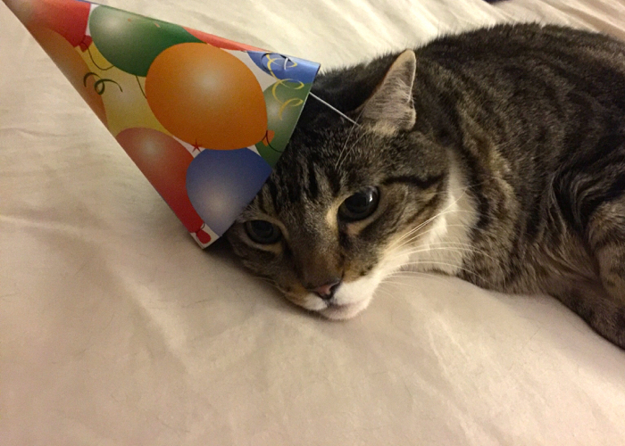 Cats In Party Hats For Morris Birthday