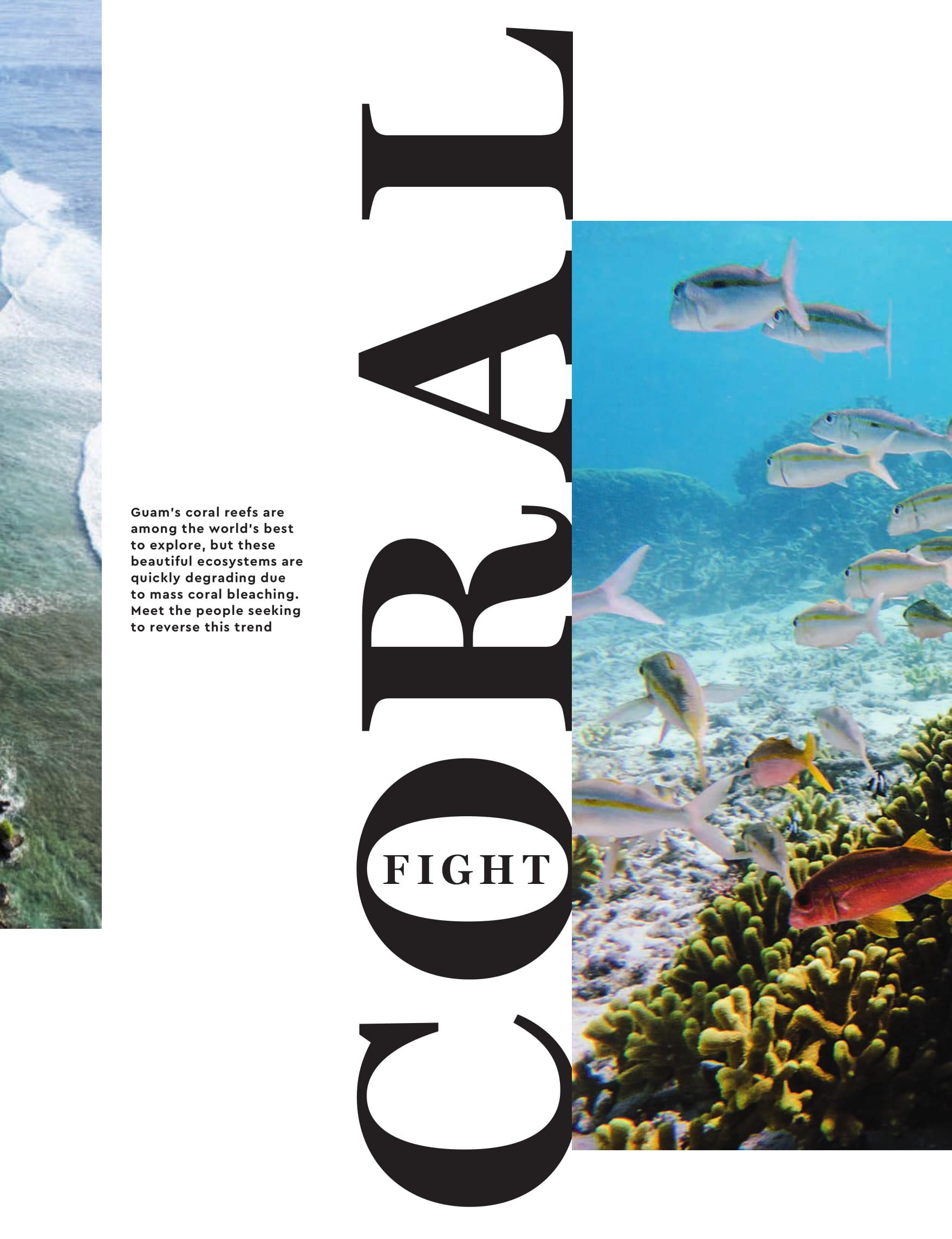 Corals p84 1