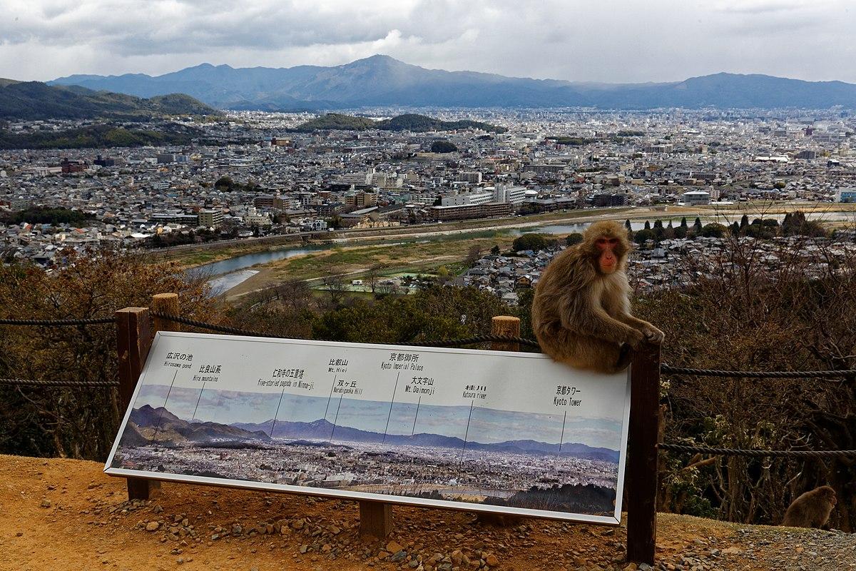 1200px-Iwatayama_Monkey_Park__Kyoto_3-25_%2826396964022%29.jpg?1537464236