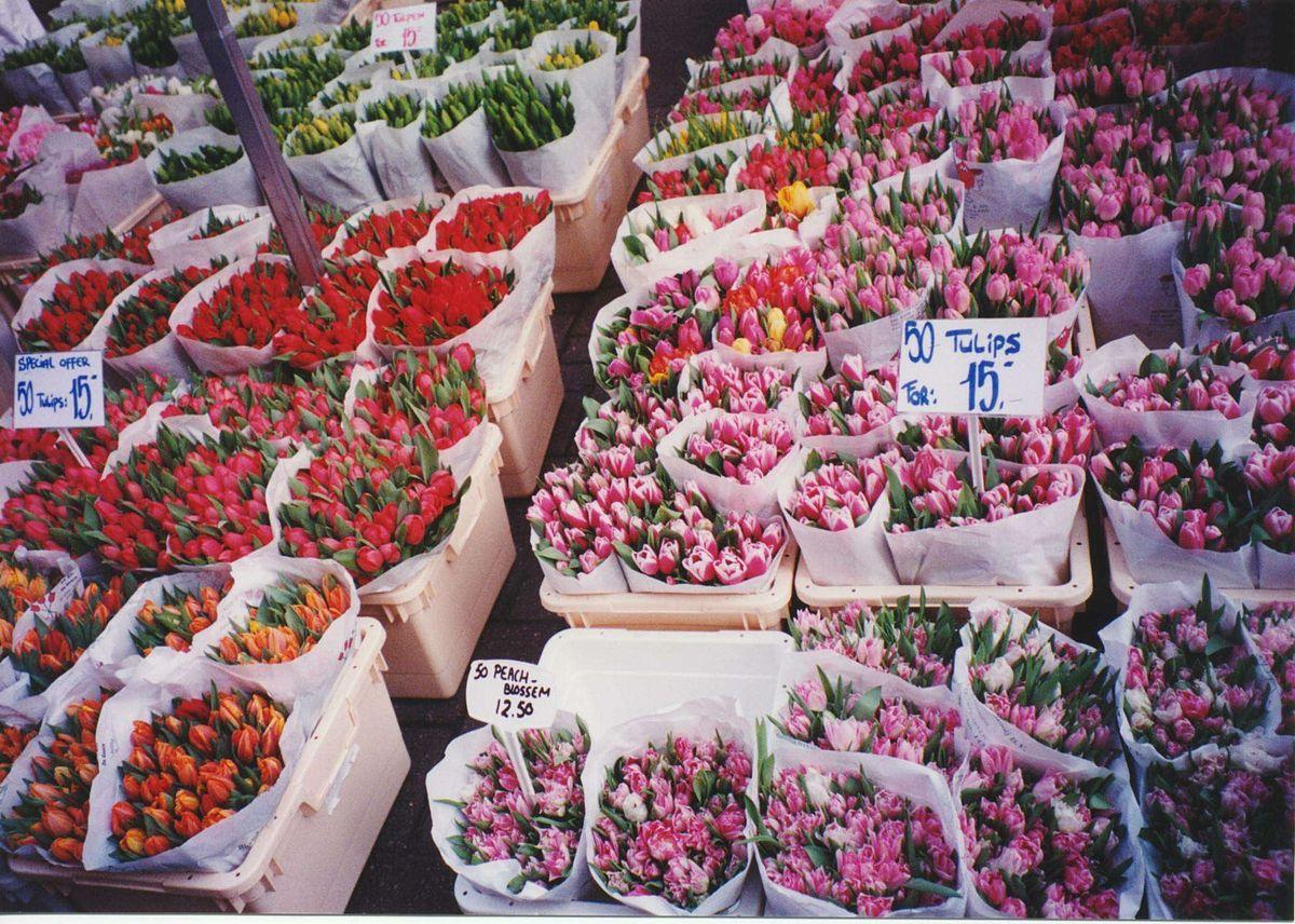 1200px-Amsterdam-tulip-market.jpg?1537526668