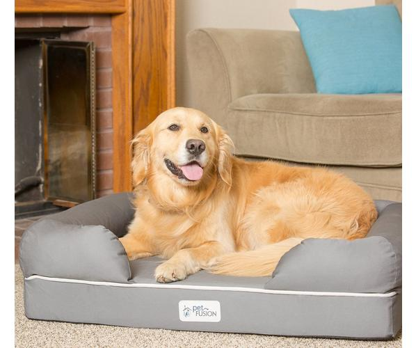 Dog in PetFusion pet bed
