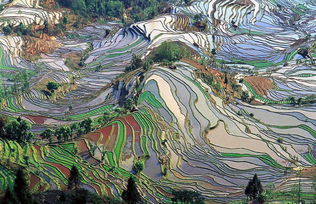 1024px-Terrace_field_yunnan_china_denoised.jpg?1538585946
