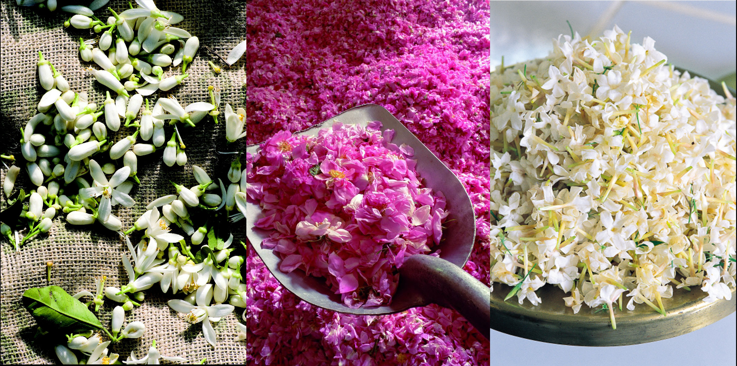 Some of the locally-grown flowers used by Fragonard in its perfumes - orange blossom, roses and jasmin