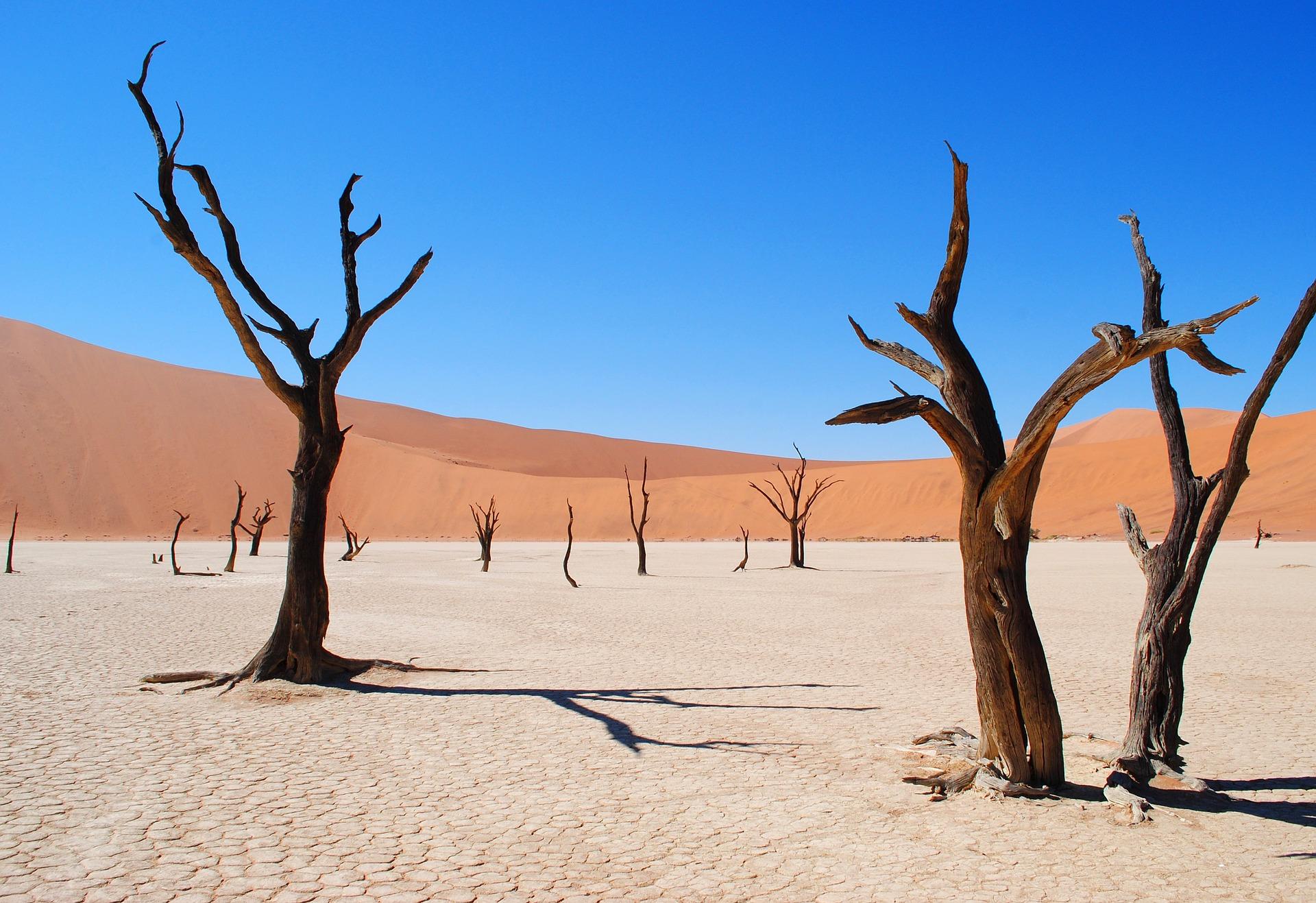 Dead_Vlei_Namibie_CC0.jpg?1544194698