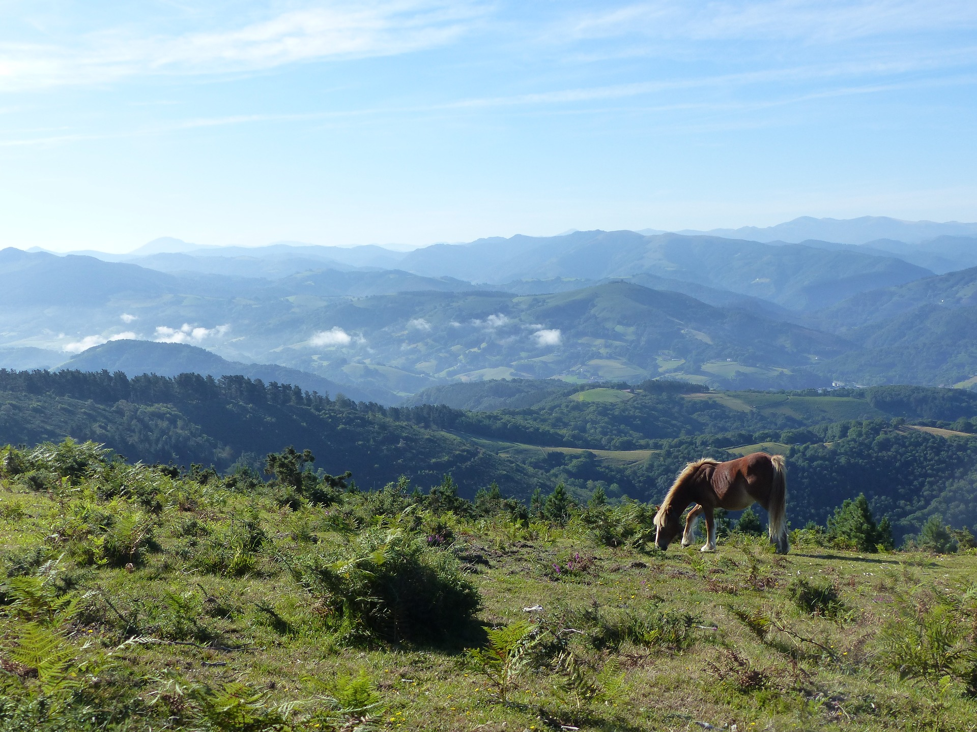 Cheval_nature_Pays_Basque_CC0.jpg?1544881951
