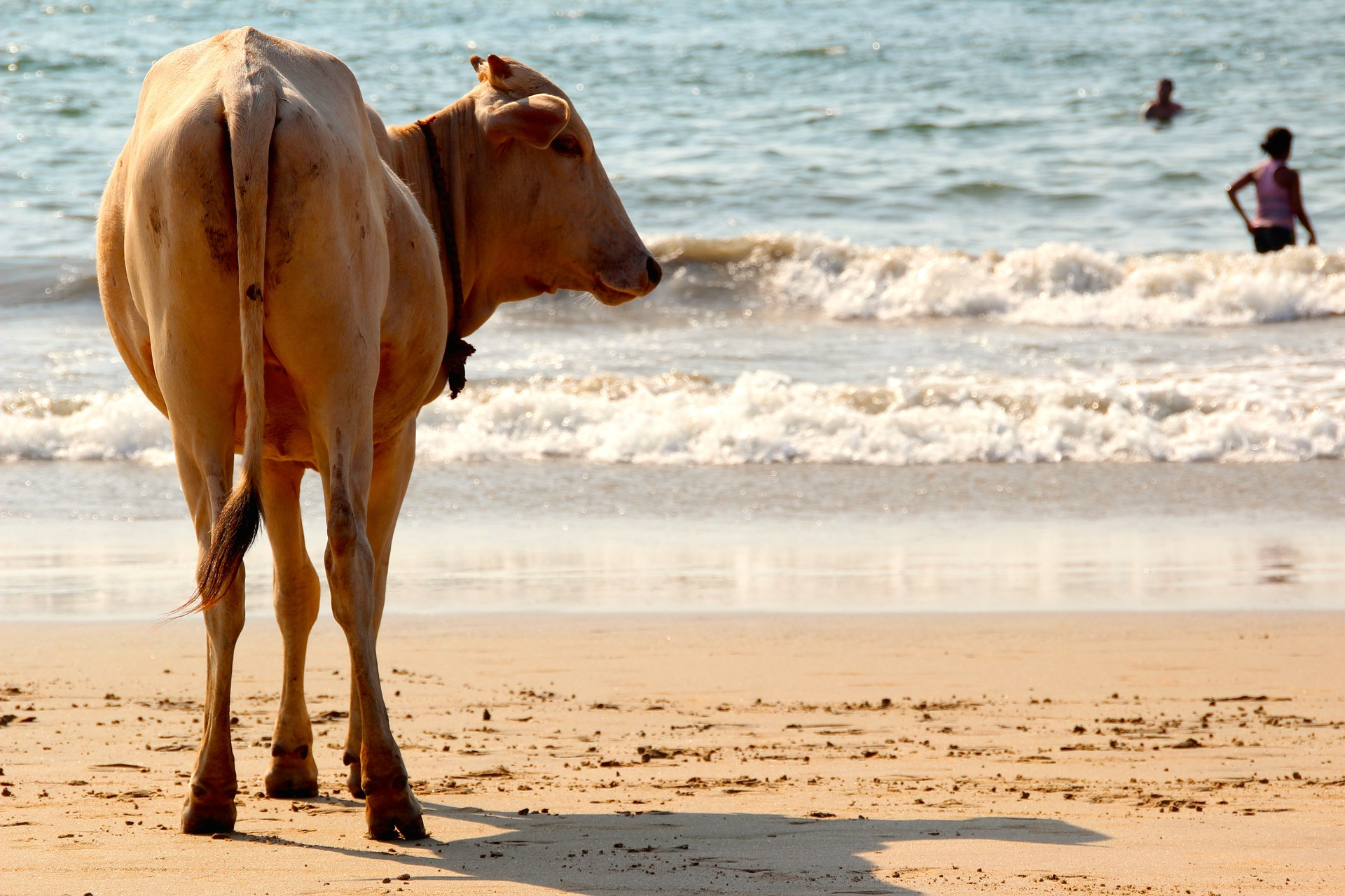 Goa_plage_CC0.jpg?1544882395