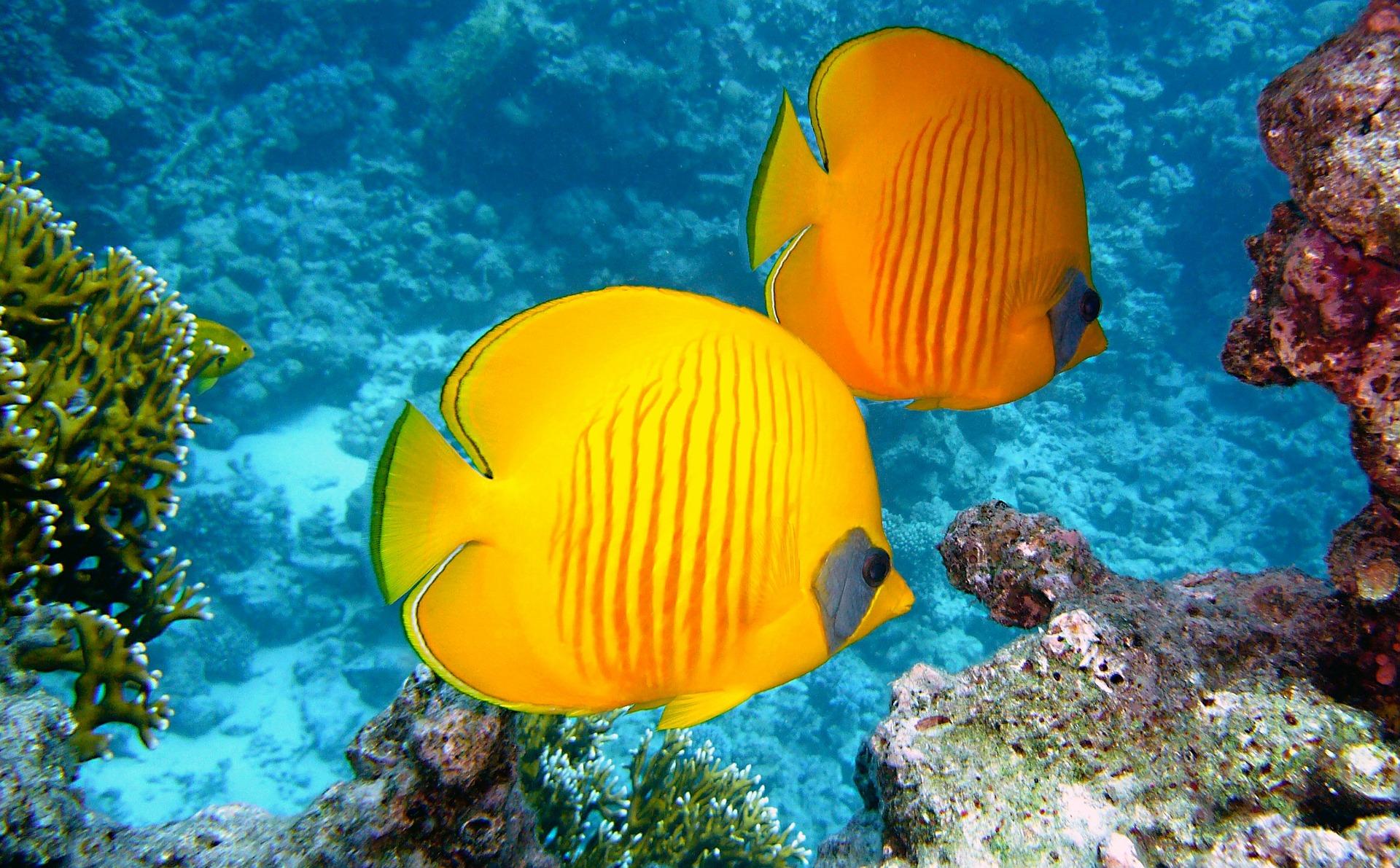 Tahiti_CC0.jpg?1545124444