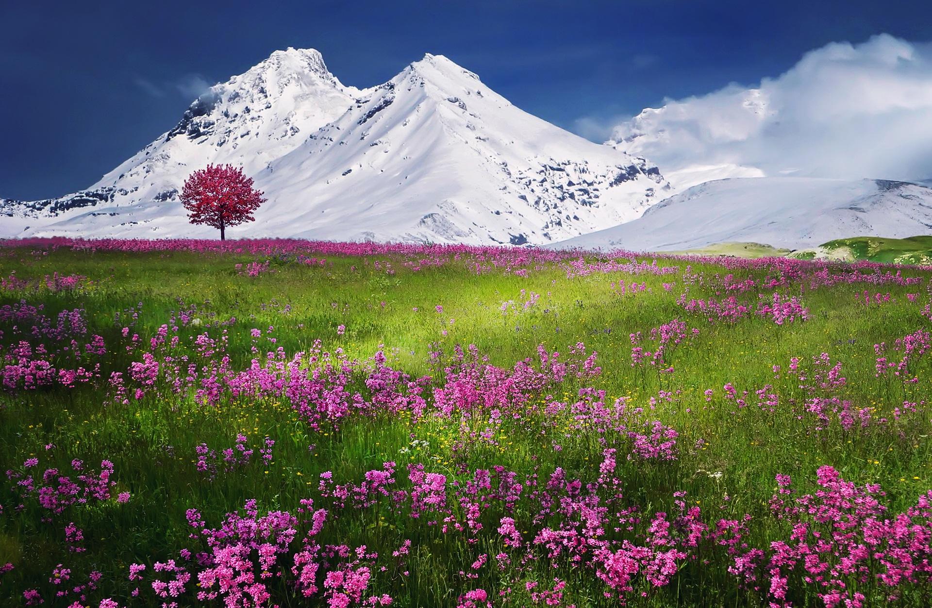 Alpes_CC0.jpg?1545562328